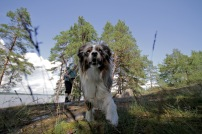 1 Vandrare Hund 1132