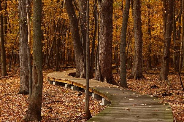 fall-1432252_640
