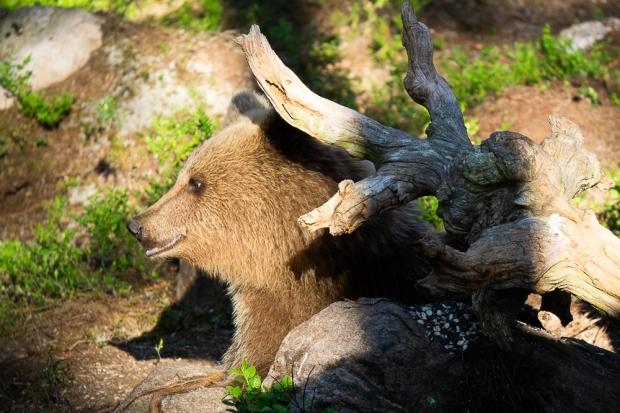 Björn Foto Gunnika-08286.jpg
