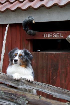 Äventyrshunden Diesel